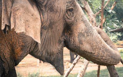 En quoi les animaux ont-ils des comportements plus adaptés ?